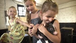 Familiebanden en onorthodoxe zaken op een Maastrichtse kinderboerderij