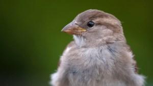 Dit zijn de meest voorkomende vogels in jouw tuin