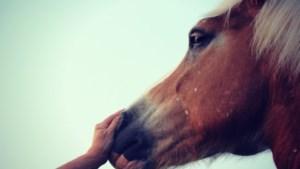 Paardenbezitters opgeschrikt door dreigbrief: 'Wij smijten eens wat in de wei bij jullie paarden'