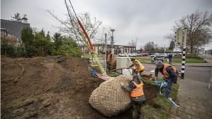 Nieuwe bomen geplant in Voerendaal na rel rond vergiftiging platanen