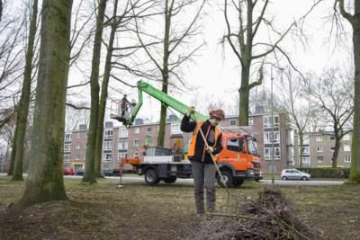 Flatbewoners willen dat gemeente Sittard-Geleen doorgaat met het verjagen van roeken