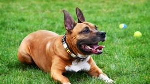 Stein schaft hondenpenning af: nooit op gecontroleerd