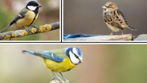 Deze tuinvogels werden dit weekend in Limburg het meest aangevinkt