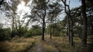 Plan provincie: kap twintig hectare bos op Brunssummerheide