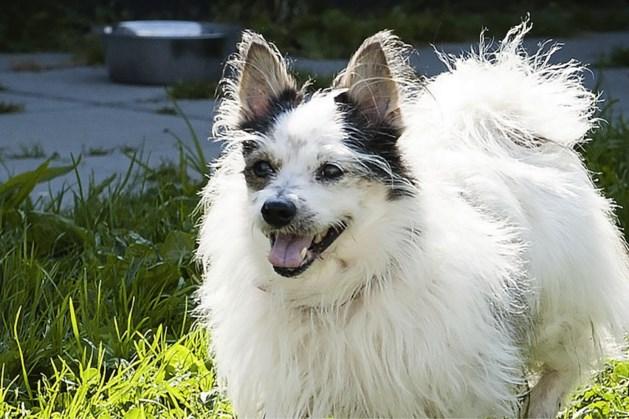 Opvang voor twintig honden mag in Evertsoord