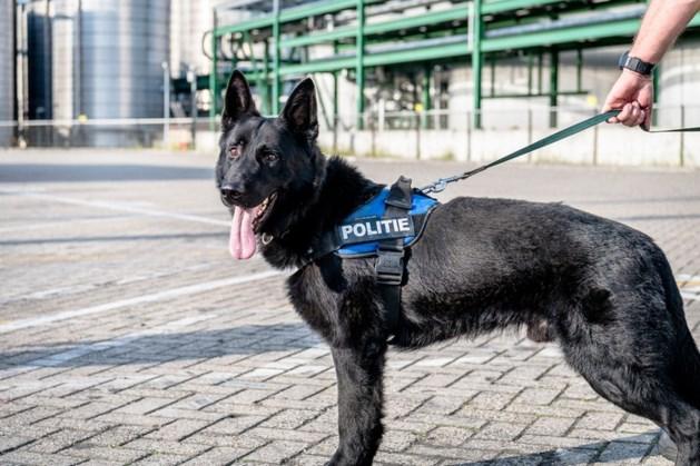 Twee politiehonden omgekomen bij autocrash België, vijf personen naar ziekenhuis