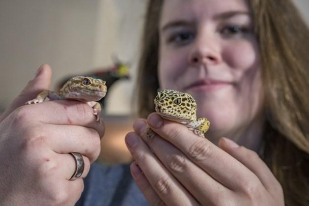 Robin uit Landgraaf is gek op haar gekko's