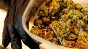 Man 'die vriend bezocht in Roermond' net over Duitse grens aangehouden met kilo's marihuana