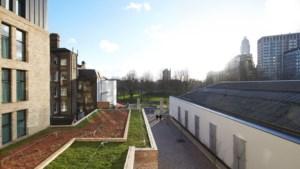 Nieuwe fabriek Venlo verwerkt rubber van oud kunstgras tot waterreservoirs voor groene daken