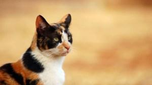 Vrouw aangehouden in onderzoek naar gedumpte, dode katten in vuilniszakken