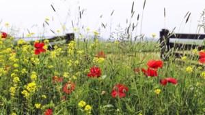 Stein wil met aanpassing van maai- en bomenbeleid biodiversiteit bevorderen