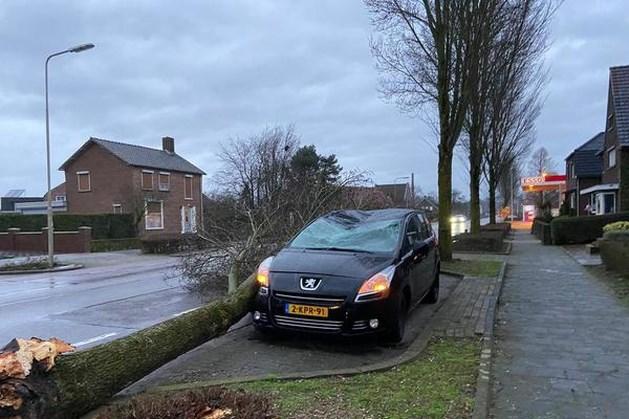 Meer dan 2100 schademeldingen na storm Ciara; maandagavond opnieuw kans op zware windstoten in Limburg