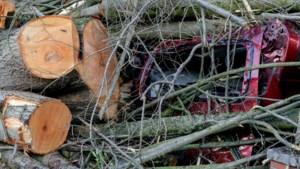 Staatsbosbeheer: wees voorzichtig in het bos na storm