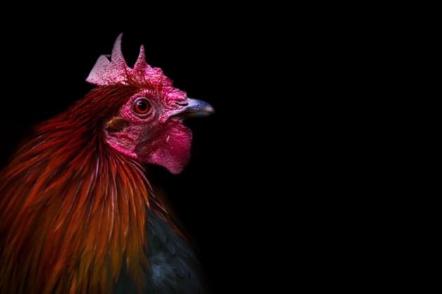 Claim over kip is misleidend: AH past verpakking aan