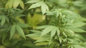 Cannabis verhoogt de gevoeligheid voor valse herinneringen
