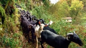 Op vakantie in Toscane: de bergen in met de schaapsherder