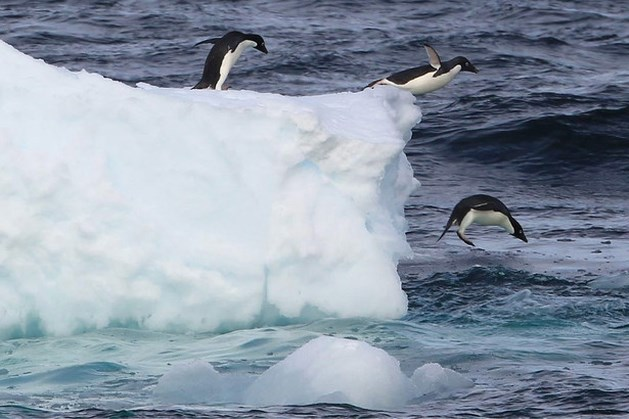 Voor het eerst warmer dan 20 graden op zuidpool