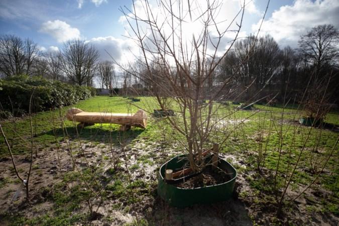 Begraven in de natuur of monumentaal graf adopteren nu ook mogelijk in Sittard-Geleen