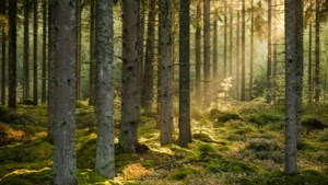 Code geel: Weeronline adviseert om uit bossen en parken te blijven