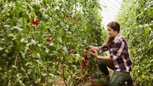 Cao-onderhandelingen tuinzaadbedrijven zitten muurvast