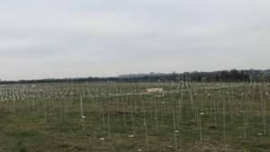 Plannen in Maastricht voor halve kilometer zonnepark aan de Maas