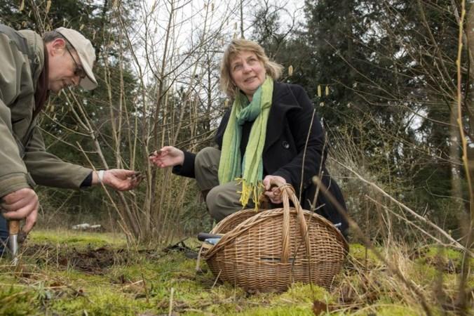 Limburgse truffel is in aantocht