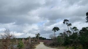 Uitfietsen: de groene omgeving, mooie paden en rust van De Maasduinen