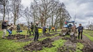 Staatsbosbeheer plant bomen aan die beter tegen droogte en warmte kunnen