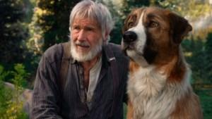 Hondendrama zit vol brave oerinstincten