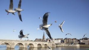 Rijk weigert mee te betalen: project om Maastricht en Eijsden te behoeden voor overstromingen stilgelegd