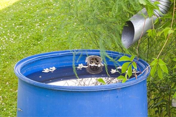 Maasgouw stopt tijdelijk subsidie afkoppelen regenwater