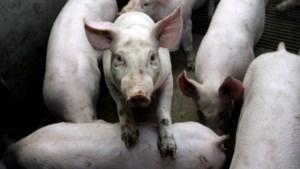 Kernoverleg Eys heeft volgens rechtbank 'geen direct belang' bij varkensstal
