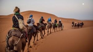 Reisorganisatie Koning Aap wijzigt reisleidersbeleid op 'verdacht' moment