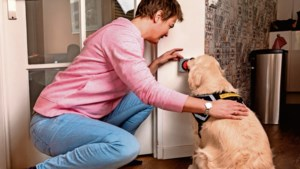 Epilepsiehond kan misschien zelfs aanval voorspellen