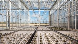 Nunhems blijkt lucratieve winstpakker voor BASF