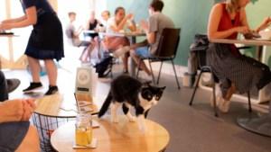 Sittards kattencafé Bie Moes gaat dicht