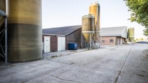 Peel en Maas houdt opnieuw uitbreiding van varkenstallen Verhoijsen tegen