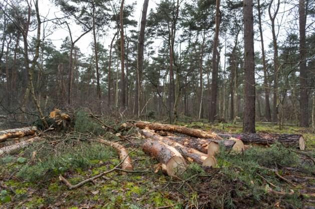 Dode en zwakke bomen in bos Eygelshoven worden gekapt om onveilige situaties te voorkomen