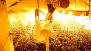 Illegale hennepkwekerijen tapten voor 60 miljoen euro stroom af