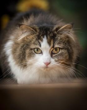 'Teckelkat' Sjonnie uit Venray kletst je de oren van het hoofd