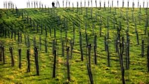 244 hoogstambomen en 2235 meter haag geplant in Eijsden-Margraten