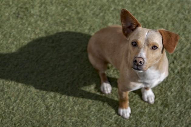 Straathond Fuego kwam van Lesbos naar Heerlen: 'Ik vergeet nooit meer hoe bang hij was'