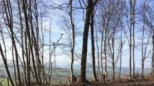 Inheemse bomen vervangen gekapte exoten in Eyserbos