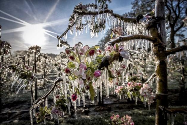 Kans op schade aan fruitbomen bij naderende nachtvorst