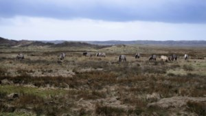 Staatsbosbeheer schrapt alle excursies tot 1 juni