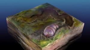 'Unieke' afdruk gevonden van 555 miljoen jaar oude voorloper mensen: wormpje kleiner dan rijstkorrel