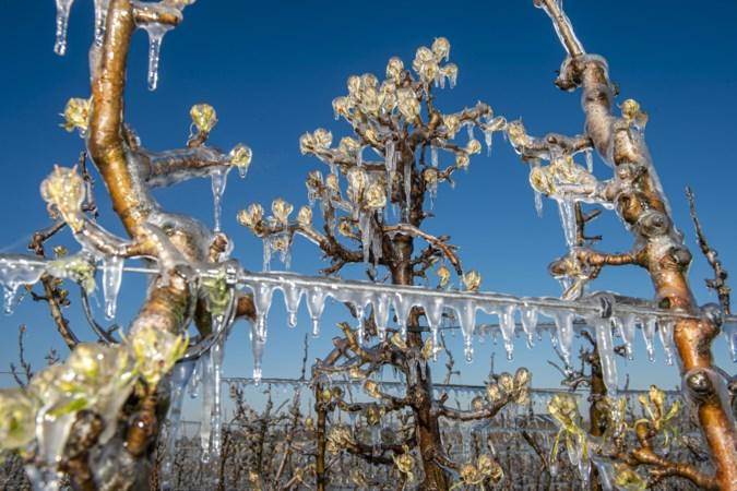 'Beregenen tegen vorstschade bloesem fruitbomen kan niet overal'