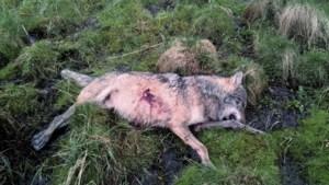 Unieke zaak: Nederlandse jager die wolf doodschoot in Duitsland moet voor rechter verschijnen