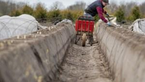 Brussel vraagt lidstaten seizoensarbeiders toe te laten
