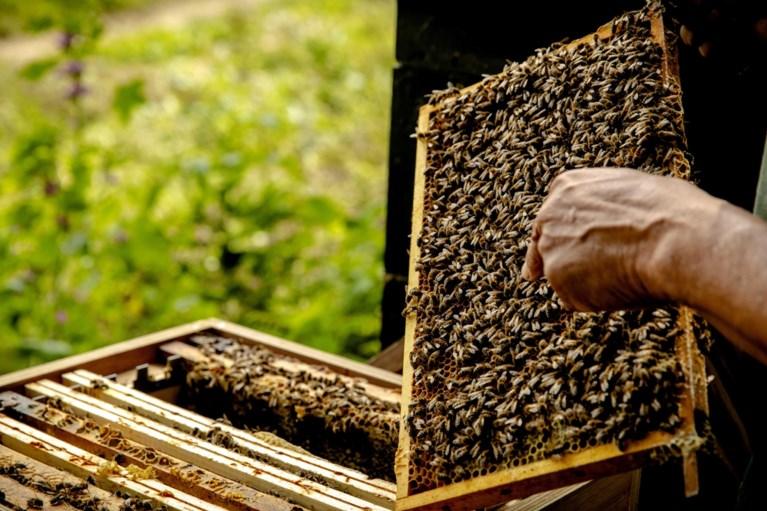 Overlast in Hoensbroek: verontreiniging door bijenpoep wordt veroorzaakt door 'reinigingsvlucht'